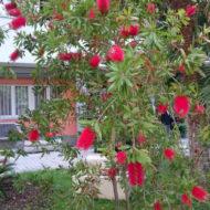 Dom Lovret - Stiglo je proljeće i u naš vrt! - Fotografija 3