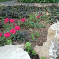 Dom Lovret - Stiglo je proljeće i u naš vrt! - Fotografija 4