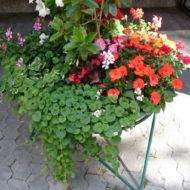 Dom Lovret - Stiglo je proljeće i u naš vrt! - Fotografija 5