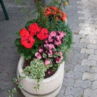 Dom Lovret - Stiglo je proljeće i u naš vrt! - Fotografija 6