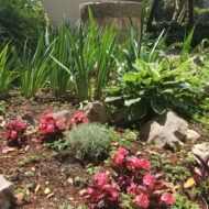 Dom Lovret - Stiglo je proljeće i u naš vrt! - Fotografija 12